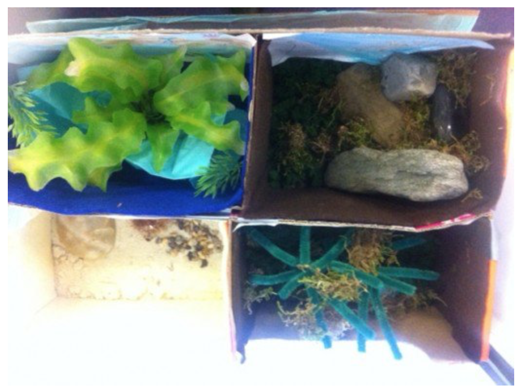 Rainforest Diorama and Ecosystem in a Shoe Box