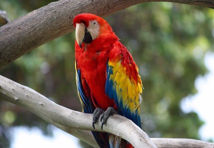 Poison Parrot Psychology